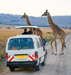 Wall Mural - Tourists in the car watching the giraffes in Kenya. National Park Masai Mara. Africa. Kenya. Tanzania. East Africa.