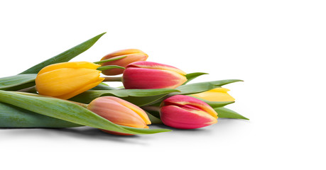 Keuken foto achterwand Tulp A side view, closeup of a collection of red, yellow and white tulip flowers isolated on a white table top.