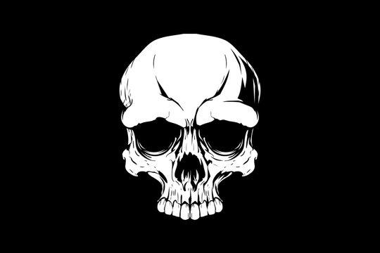 human skull head vector design