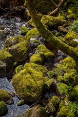 Closeup of stones and tree trunk by the water covered with green thick wet moss.