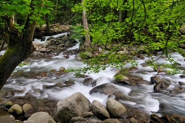 Little Pigeon River in Greenbrier, Smoky Mountains, TN, USA