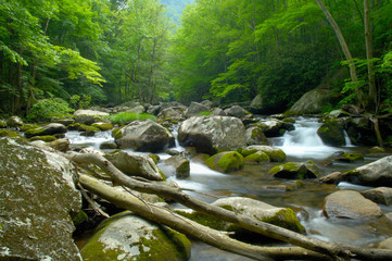 Tremont at Great Smoky Mountains National Park, TN USA