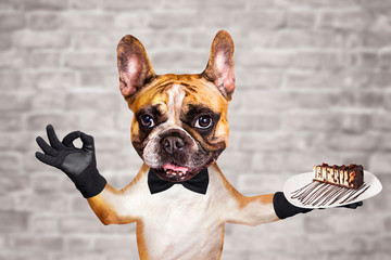 Tuinposter Franse bulldog funny dog ginger french bulldog waiter in a black bow tie hold a dessert pie on a plate and show a sign approx. Animal on brick wall background