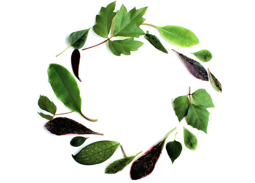 Green leaves of domestic plants are arranged in a circle on a white background. The view from the top.