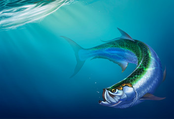 Tarpon big fish on background. The Elopiformes on depth background realistic illustration.