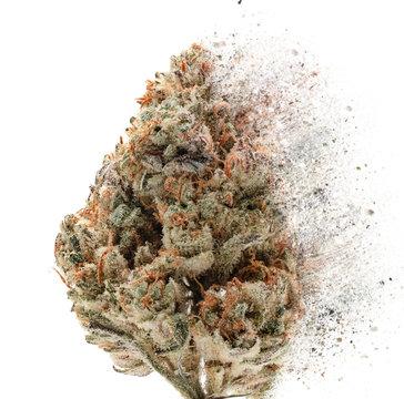 Cannabis Snap on white