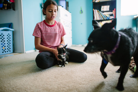 Girl holds kitten close during introduction to dog while cat hisses
