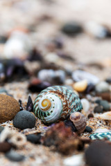 Natural seashells sitting on sandy surface.