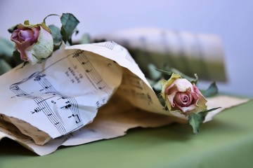 róża, muzyka