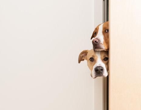 Sneaky Dogs Looking Through Door Way into Room
