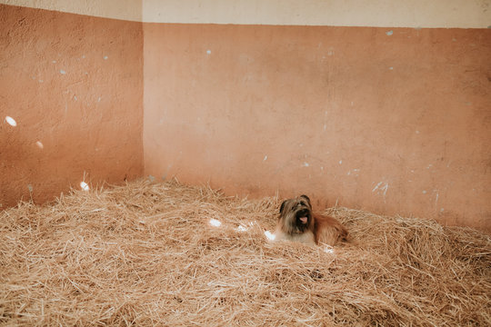 Funny little dog lying on heap of fresh hay inside stable on ranch
