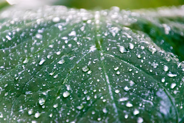 Water droplets on the leaves Wall mural