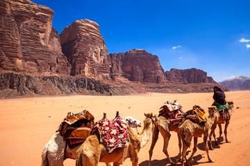 Cammelli nel deserto del Wadi Rum, Giordania