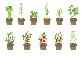Fototapeta Growing vegetables in a pot. Set of potted plant. Home garden. Tomato, onion pepper growth. Isolated vector illustration. obraz
