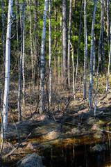 image of a bog