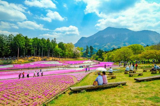 芝桜公園と武甲山の展望