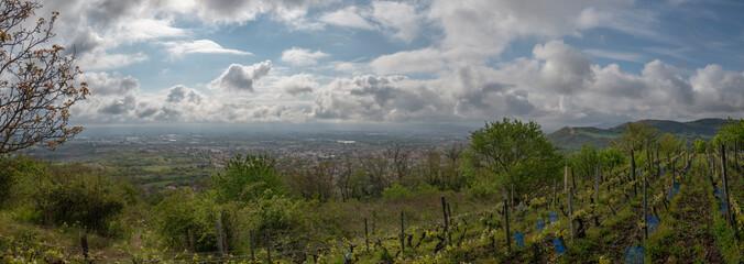 les vignes de Chateaugay au dessus de Clermont