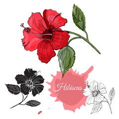 Set with monochrome, colored and silhouette of hibiscus flower. Hand drawn ink sketch isolated on white background.