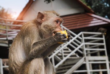 Monkey freedom in relaxing time.