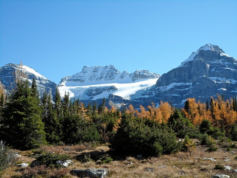 The Larch trees and snowy peaks during a hike through Larch valley, Canada