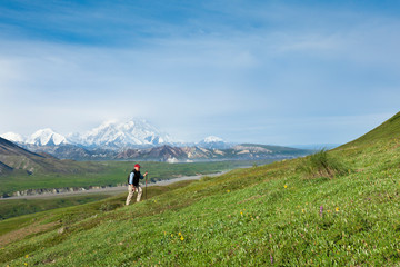 Senior Man Hiking On The Tundra In Thorofare Pass With Mt. Mckinley In The Background, Interior Alaska, Summer
