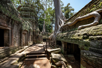The famous Strangler fig tree growing on the ruins of Ta Prohm temple, Siem Reap, Cambodia