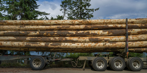 Large logs loaded on a transport truck; Riondel, British Columbia, Canada