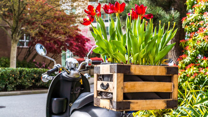 Moped and a bouquet of tulips in a wooden basket.