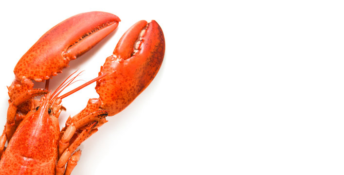 Lobster isolated / Steamed lobster seafood shrimp prawn on white background