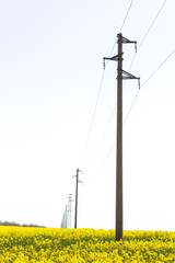 A line of electric poles with cables of electricity in a rape field with a forest in background.