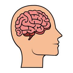profile with brain human organ