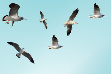 Seagulls are flying in sky as a background