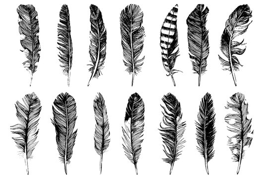 14 hand drawn feathers isolated on white background