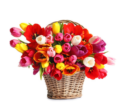 Wicker basket with beautiful spring tulip flowers on white background