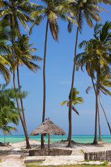 Foto auf AluDibond Sansibar Beach resort with palm trees,Zanzibar island,Tanzania