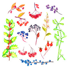 Branches collection with berries and leaves, isolated on white watercolor illustration