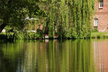 Spree Forest landscape, a weeping willow on the river with a boat. Germany
