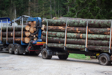 cut tree in forest ready for truck transport