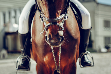 Close up of a brown horse nose Papier Peint