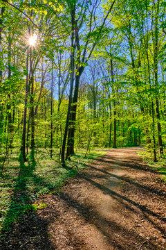 Waldweg bei Sonnenschein mit grünen leuchtenden Blättern am Wegrand. Die strahlende Sonne scheint durch die Baumkronen auf den Weg. Waldbild im Hochformat.Sonne