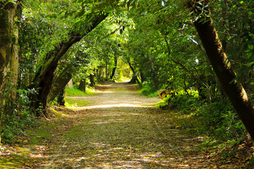 Path in a forest with Arched tree branches