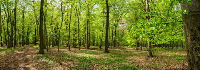 Green forest in spring panorama