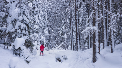 Skiinginto the forest, between snowclad trees