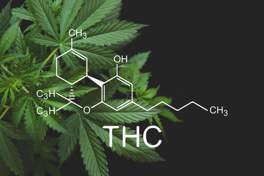 THC formula, Tetrahydrocannabinol . despancery business. cannabinoids and health, medical marijuana, Hemp industry, CBD and THC elements in Cannabis,Growing Marijuana,