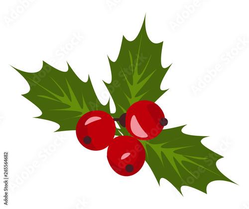 Christmas Holly Vector.Christmas Holly Berry Mistletoe Vector Or Color Illustration