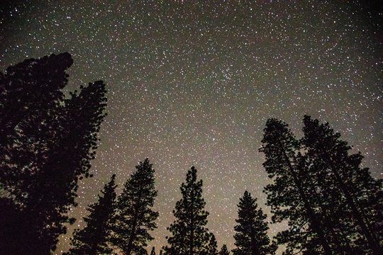 A starry sky with pine trees in the foreground from Kings Canyon National Park.