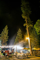 A group of people standing underneath a grove of tall pine trees at night.