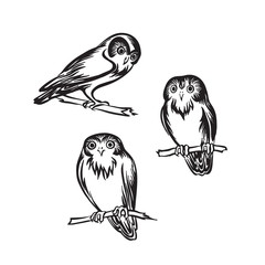 Hand drawn owl set outline sketch. Vector bird black ink drawing isolated on white background. Graphic illustration