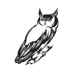Hand drawn sitting owl outline sketch. Vector bird black ink drawing isolated on white background. Graphic illustration
