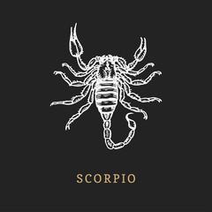Scorpio zodiac symbol, hand drawn in engraving style. Vector graphic retro illustration of astrological sign Scorpion.